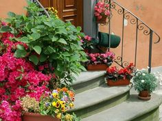 Flower Gardening For Beginners Garden Decoration Ideas - Decorate the garden or porch with flowers Stone Flower Beds, Flower Pots, Small Courtyard Gardens, Small Gardens, Beautiful Gardens, Beautiful Flowers, Stair Decor, Flower Garden Design, Colorful Plants
