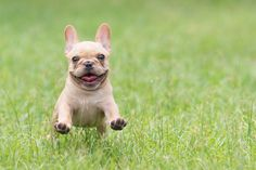 """Click visit site and Check out Cool """"French Bulldog"""" T-shirts. This website is outstanding.  Tip: You can search """"your name"""" or """"your favorite shirts"""" at search bar on the top."""
