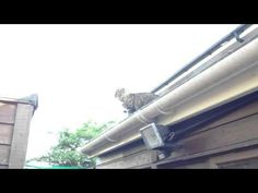 "https://t.co/bK7cxSlmnZ  Cat fails at jumping http://img.youtube.com/vi/cwd0B57qAXg/0.jpg *Powered by SG*  Cat tries to jump from one roof to another and fails badly. *Powered by SG* Please follow and like us:  			var addthis_config =  				 url: """", 				 title: """" 			 			   http://100review.com"