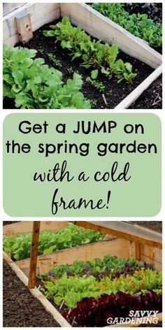 Get a jump start on the spring garden with a cold frame! Cold Frame Gardening, Cold Climate Gardening, Organic Gardening, Fall Vegetables, Growing Vegetables, Growing Tomatoes, Spring Garden, Winter Garden, Starting A Vegetable Garden