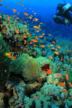 Recognizing Our Marine Wildlife on Endangered Species Day