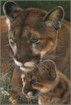 Baby Tattoos For Moms 322992604500248690 - belles images animaux sauvages Source by Animals And Pets, Baby Animals, Cute Animals, Wild Animals, Beautiful Cats, Animals Beautiful, Beautiful Artwork, Simply Beautiful, Beautiful Pictures