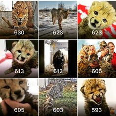 These are the top images on our instagram page! Thank you to everyone who follows us here!!