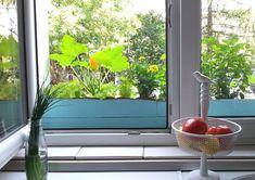 Rośliny jadalne na parapecie - Klinika DIY Aquarium, Diy, Plants, Goldfish Bowl, Bricolage, Aquarium Fish Tank, Do It Yourself, Plant, Aquarius