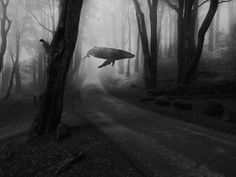 photoshop whale flying - Google Search