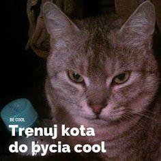 #2. Jak być cool? - Trening kota | Czytnik Miodu.