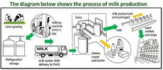 The Process of Milk Production - Sample Writing Task 1 Essay | ieltswithmrduc