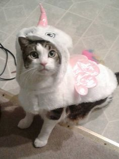 Animals in Halloween costumes – 30 Pics