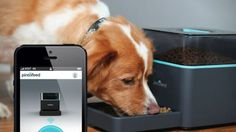 Pintofeed | automatic dog feeder