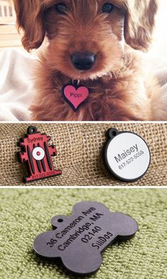 No more noise from jingling metal or plastic dog tags. These silicone dog tags are flexible, durable, fade-proof, and silent. Inspired by his scratch-happy rescue dog, Founder Michael Lickstein created a noiseless tag that you can have custom engraved. Cute Puppies, Cute Dogs, Dogs And Puppies, Doggies, I Love Dogs, Puppy Love, Animals And Pets, Cute Animals, Dog Cat