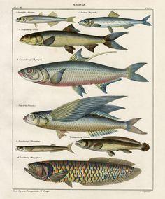 Oken Sztuka Antyki, druki powłoki, odciski ryb, druki koralowe, meduzy drukuje 1833-1841
