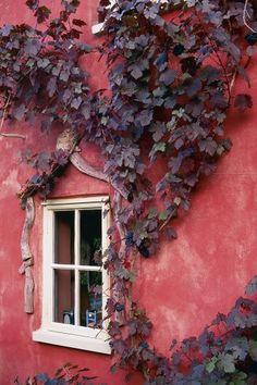 extérieur : mur rouge pâle, plante grimpante, végétation