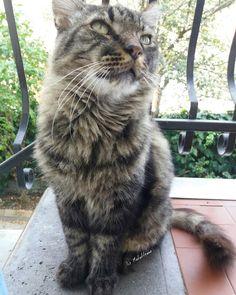 Va bene va bene mi metto in posa, ma solo perché hai quei mitici crocchini al formaggio 😻😻😻 https://www.instagram.com/p/BZqovITBpKf/  #tonythecat #tony #weekend #mylove #mylife #solocosebelle  #cats #cutecats #sweetcats #lovelovelove #lovecat #cats #pets #animals #photooftheday #ilovemycat #nature #catoftheday #lovecats #catsmylove #gatti #ioamoglianimali #MIAO :-)