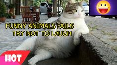 Funny Animals Fails 4   Try Not To Laugh Challenge   Compilation Vines