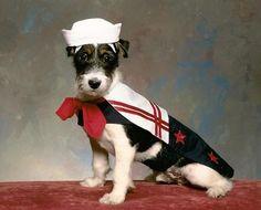 sailor dog - dog fashion