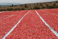 Balıkesir'in Bigadiç ilçesinden 3 kıtaya kurutulmuş domates ihraç edilmeye başlandı. Nun