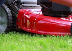 Lower the Cost of Lawn Care -- Savings Experiment - DailyFinance