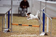 Hundesport - Agility - Hier: B.A.C.K. Ostbayernhalle 02.01. - 04.01.2015