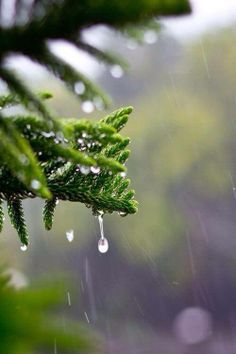 Image about gif in ❅ Fall - Rain - Waterfalls - Nature ☂ by ❥ Bambi I Love Rain, No Rain, Rainy Night, Rainy Days, Rain Dance, Rain Photography, White Photography, Singing In The Rain, Water Droplets