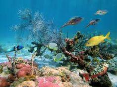 Afbeeldingsresultaat voor onderwater wereld vis