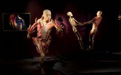 """""""The Human Body"""" se organizează în premieră în România"""