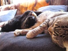 #Tom #Cat #1Year #Freya #Dog #5 Month #MyMonsters #IWnatToSleep #Puppy #Pets #Baby #CanaryIsland #Play