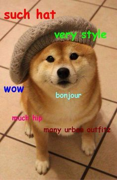 Such hat, very style. #doge