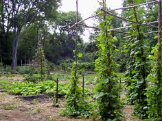 images of colonial vegetable gardens   My favorite part of the Grassmere area is its garden, tended on a ...