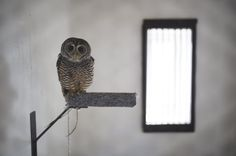The world's oldest centre for birds of prey – in pictures