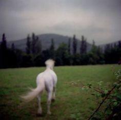 """Patrick Taberna """"Au fil des jours-Ibardin,2004"""""""