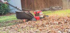 leaf-mulch Wood Chip Mulch, Leaf Mulch, Types Of Mulch, Rubber Mulch, Organic Mulch, Crushed Stone, Weed Seeds, Landscape Fabric