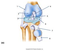 Knee diagram to label wiring diagram arcade of frohse google search anatomy pinterest arcade and rh pinterest com knee anatomy labeled anterior knee diagram ccuart Images