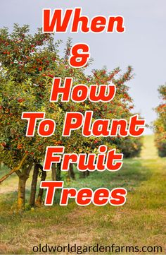 To Plant Fruit Trees In The Fall - Grow Your Own! Find out when the best time is to plant fruit trees and how to do it!Find out when the best time is to plant fruit trees and how to do it! Planting Fruit Trees, Growing Fruit Trees, Fruit Plants, Fruit Garden, Garden Trees, Growing Plants, Growing Vegetables, Trees To Plant, Potted Fruit Trees