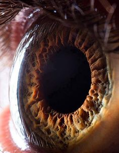What's in the Eye.