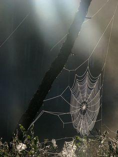 'അല്ലാഹുവെ കൂടാതെ രക്ഷാധികാരികളെ സ്വീകരിക്കുന്നവരുടെ അവസ്ഥ എട്ടുകാലിയുടേത് പോലെയാണ്. അതൊരു ഭവനമുണ്ടാക്കി. ഭവനങ്ങളിലേറ്റവും ദുര്ബലം എട്ടുകാലിയുടെ ഭവനമാണ്. അവര് കാര്യം ഗ്രഹിക്കുന്നവരാണെങ്കില്'  -വിശുദ്ധ ഖുർആൻ - 29/41 Spider Net, Itsy Bitsy Spider, Charlottes Web, Web Design, Amazing Spider, Science And Nature, Color Photography, Nature Pictures, Mother Nature
