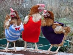 Knitted Chicken Sweaters Free Patterns | The WHOot Not that I have chickens but these are too cute!