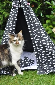 How to Build a DIY Cat / Dog TeePee - Sugar & Cinnamon Design Cat Boarding, Diy And Crafts, Kitty, Blanket, Sammy, Dogs, Fun, Animals, Cinnamon