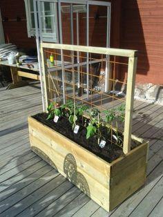 Newest For Deck Gardening For Beginners Farm Gardens, Small Gardens, Outdoor Gardens, Vegetable Garden For Beginners, Gardening For Beginners, Gardening Hacks, Urban Gardening, Growing Tomato Plants, Magic Garden