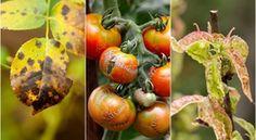 """9 gyakori növénybetegség – mikre figyeljünk oda és hogyan """"gyógyítsuk"""" őket"""