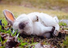 Rolling in the mud by Exempeel on DeviantArt Funny Bunnies, Baby Bunnies, Bunny Paws, Funny Rabbit, Bunny Bunny, Animals And Pets, Baby Animals, Cute Animals, Cute Bunny Pictures