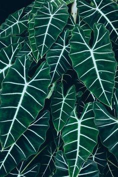 Un beau vert, une couleur tendance en 2015 #green #color #inspiration…