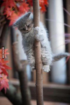 A super cute kitten is climbing a tree
