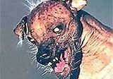 The World s Ugliest Dog