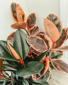 Indoor Garden, Garden Plants, Belle Plante, Decoration Plante, Plant Aesthetic, Pot Plante, Plants Are Friends, Interior Plants, Faux Plants