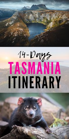 A 14 day Tasmania road trip is the ultimate way to explore this amazing island. In our 'Ultimate' itinerary we show you the best, most Insta-friendly things to see and do, amazing accommodation, gourmet dining experiences and handy driving and road trip planning tips and hacks | #tasmania #roadtrip #australia | Australia road trip | road trip itinerary | road trip planning | Australia holiday | Tasmania holiday | self drive Tasmania | Tasmania self drive | 📷: Jason Charles Hill, Rob Burnett