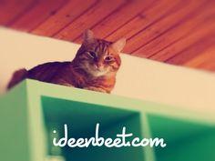 Alles im Blick – ideenbeet.com | #Ideenbeet #Selbstorganisation #Büromanagement #Bürotiger
