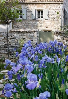 Stone masonry and blue iris at an estate, Corfu, Greece. Iris Flowers, Blue Flowers, Planting Flowers, Beautiful Gardens, Beautiful Flowers, Jardin Decor, Iris Garden, Bearded Iris, My Secret Garden
