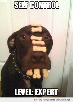 Google Image Result for http://funnyasduck.net/wp-content/uploads/2012/12/funny-dog-balancing-treats-nose-mouth-self-control-expert-pics.jpg