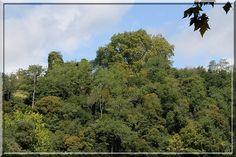 A Peyrehorade, le vieux château d'Aspremont tente de se cacher dans la végétation. Mais il ne sait pas que Le Chevalier Dauphinois sait voir à travers les feuilles... Tu es là, je te vois !