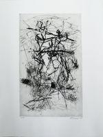fiftyfifty Galerie - Lior Körner
